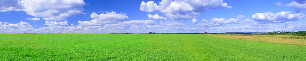 A large wide open green field