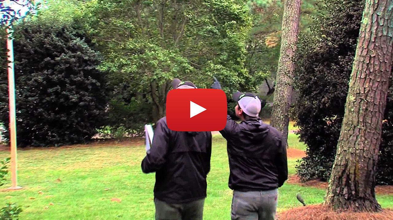 Sussex Tree & STI Landscaping Video Thumbnail tree services info