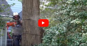 sussex-tree-services-video-thumbnail
