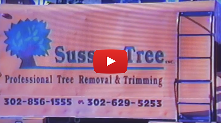 A video for Sussex Tree Professional Tree Removal & Trimming