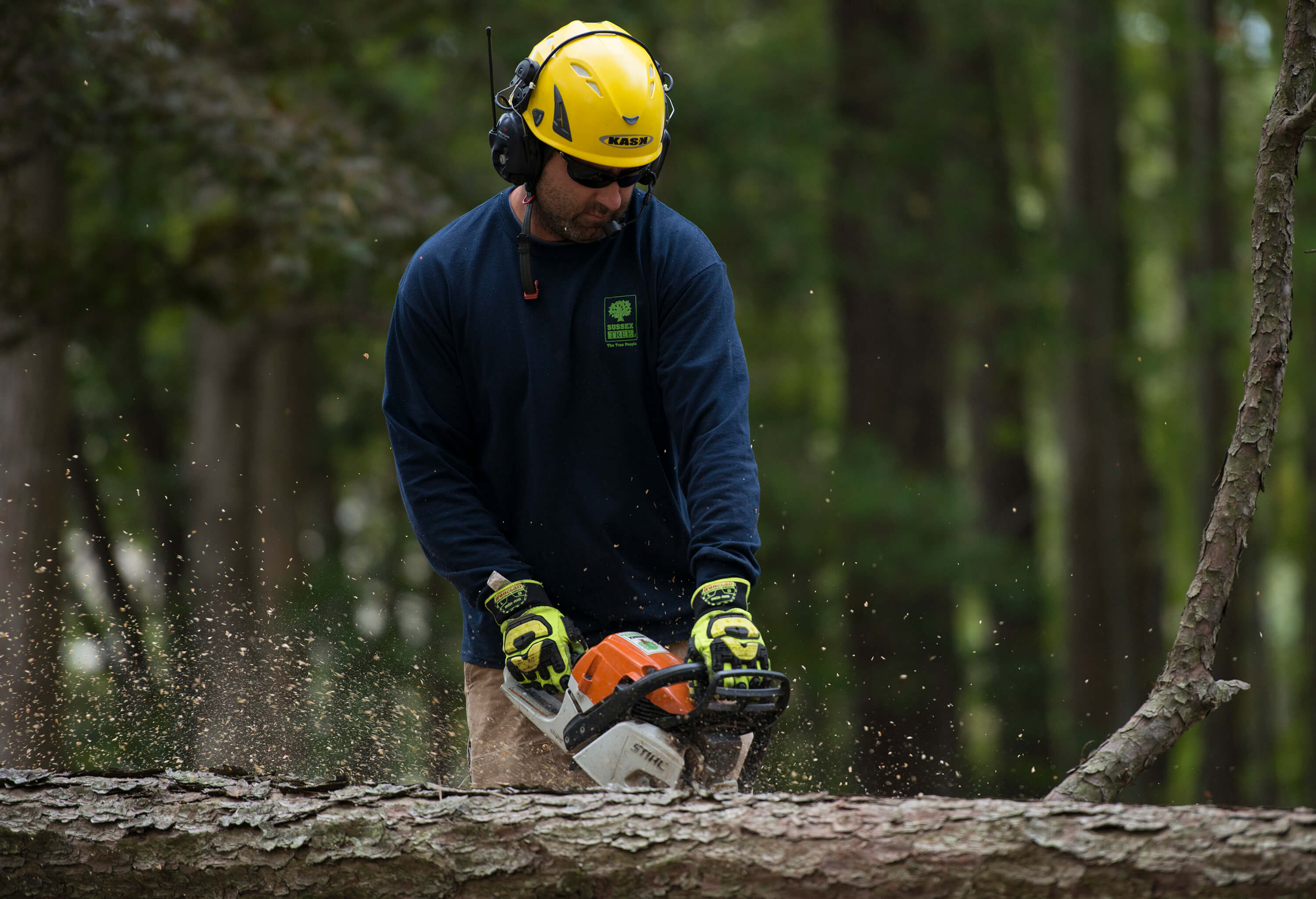 Chainsawing a downed tree