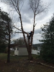 Eastern Shore Tree Removal Services