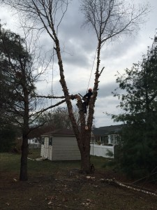 Eastern Shore Tree & Branch Removal
