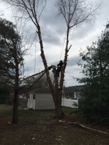 guy removing tree next to shed