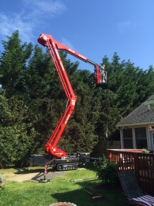Sussex Crane Carrying man towards treetops