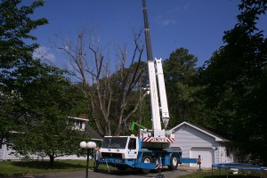 Sussex Tree Truck and Cherry Picker with trampoline on side