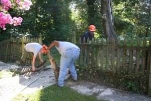 Sussex Trees & STI Landscaping hard at work