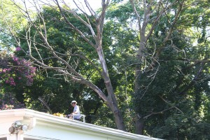 Tree Care by Sussex Tree