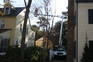 Sussex Tree Service Call