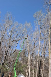 Tree Services performed in Delaware