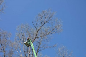 Eastern Shore Tree Services