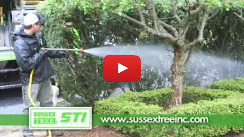 Sussex Tree and STI video thumbnail