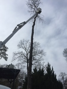 Sussex Tree Performing Tree Removal