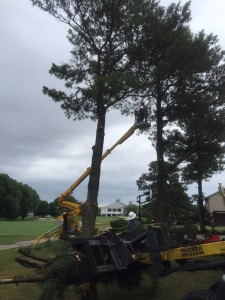 Tree Trimming in Lewes DE