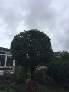 large tree in front of house