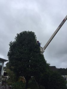 tree trimming services delaware
