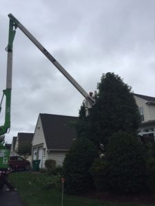 man in bucket lift next to tree