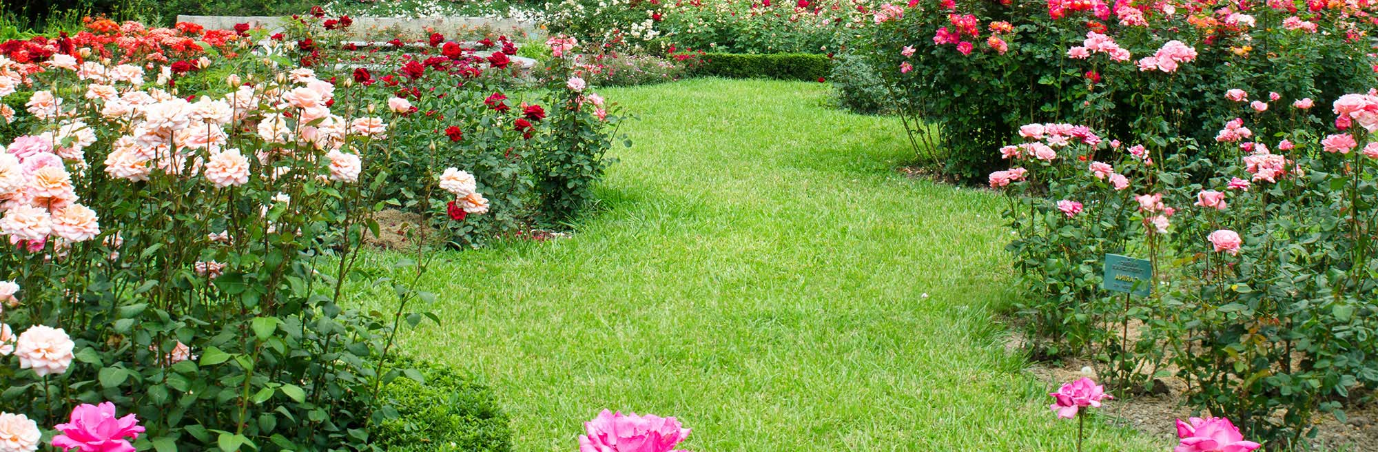 Landscaping with bushes of pink and red flowers